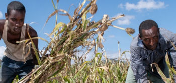 Capacity Development to Strengthening Drought Resilience in the Lowlands of Ethiopia (CDSDR-II)